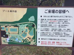 プール案内図