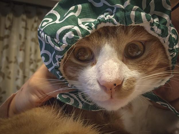 泥棒猫,唐草模様